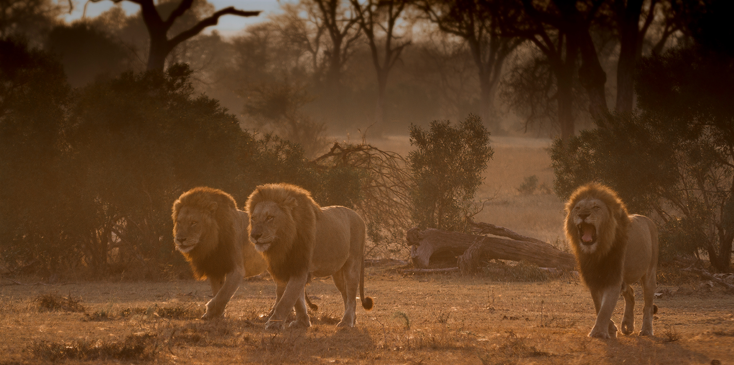 Track-Your-Life-Retreat-Lion-Tracking